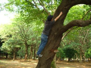 樹液の出具合を再確認するとってい