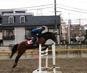 馬との信頼関係を日々築く
